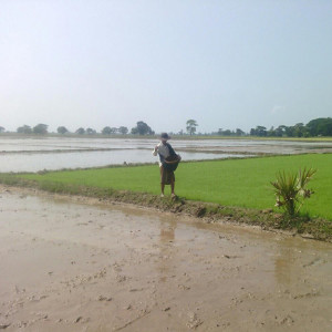 A rice farmer in Burma