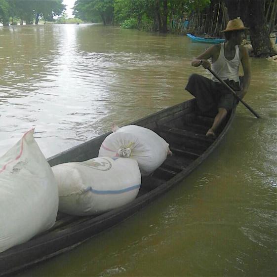 Livelihood - farmer collecting rice seed