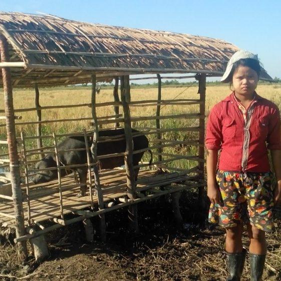 pig owner 7