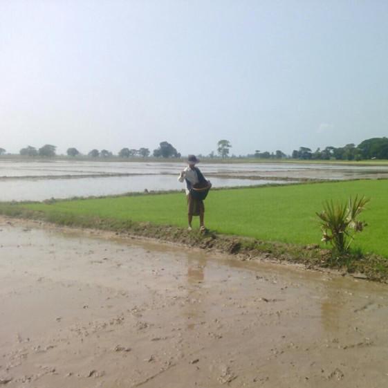 rice-farmer-burma